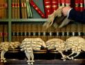 Best Criminal Lawyer Parramatta